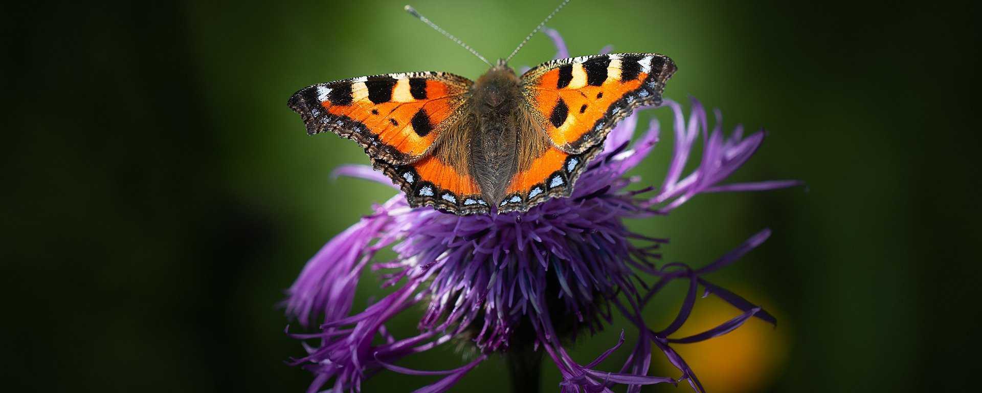 Schmetterlinge im Hort des Roten Hauses